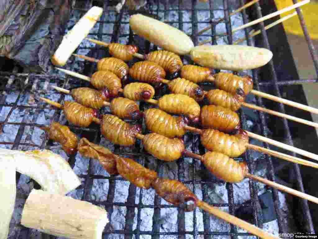 Личинки бабочек – традиционная еда в регионе Амазонки, Эквадор, Южная Америка