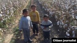 Несмотря на международную критику, власти Узбекистана до сих пор продолжают использовать детский труд при ежегодном сборе хлопка.