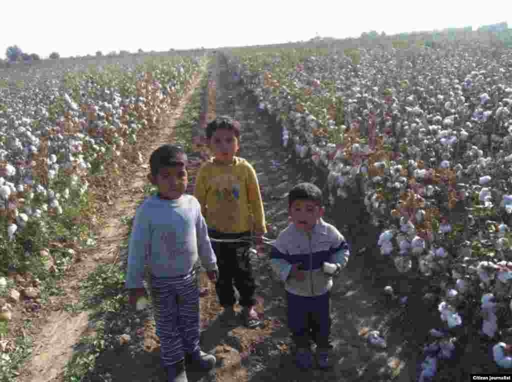 Uzbekistan--Though prohibited from opperating in the country officially, RFE/RL's Uzbek Service has used social media to cultivate a network of citizen journalists who assist in reporting on the ground, including on forced labor in the annual cotton harvest.