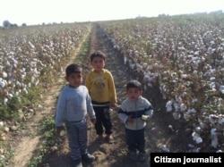 Дети стоят посреди хлопкового поля. Узбекистан, 2014 год.