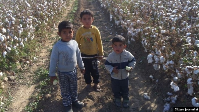 Using child labor to harvest cotton is rampant in Uzbekistan. (file photo)