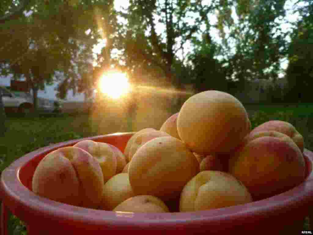 Абрикосовый рай в Баткене #5