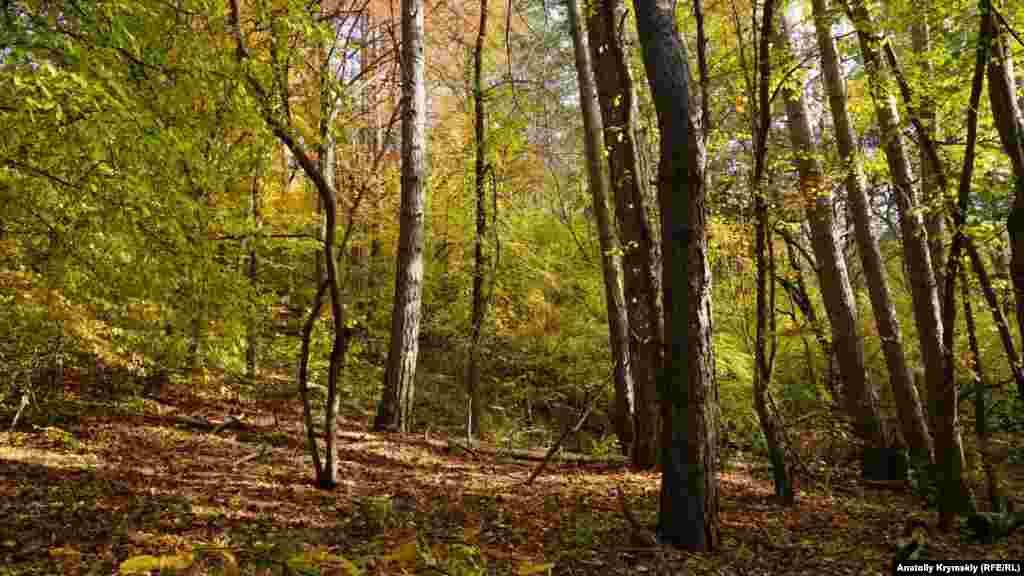 Özenden biraz yuqarı mantarlı yerlernen qarışma orman başlana
