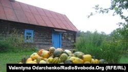 Український сільський пейзаж