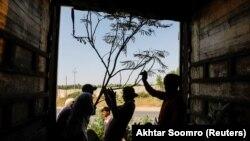 Карачи қаласының сыртында ағаш отырғызып жүрген жұмысшылар.