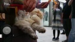 10 кошек выступают в защиту бездомных животных