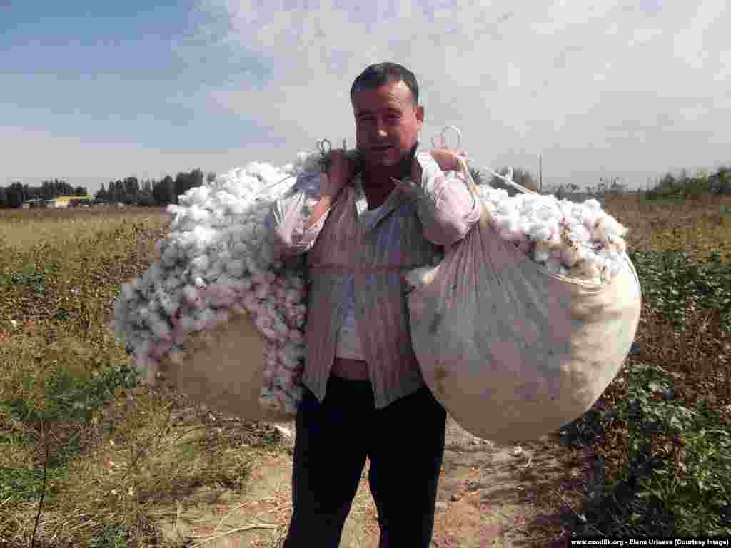 "Many Uzbeks are ordered by their employers to temporarily give up their normal work and pick cotton instead. Medical students report being forced to sign documents saying they are going to the fields ""voluntarily, in order to help his motherland to thrive."""
