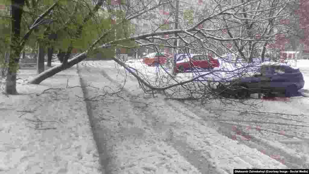 Негода у Запоріжжі: повалені дерева, понищені автівки