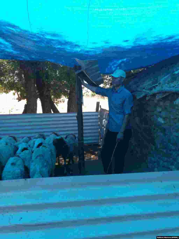 Солардың бірі – 42 жастағы Огур Гуляржуз. Ол 15 жылдан бері қой бағып отыр. 120 сауын қойы мен ешкісі, жүздеген қозысы бар.