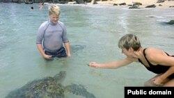 Морские черепахи доверяют человеку