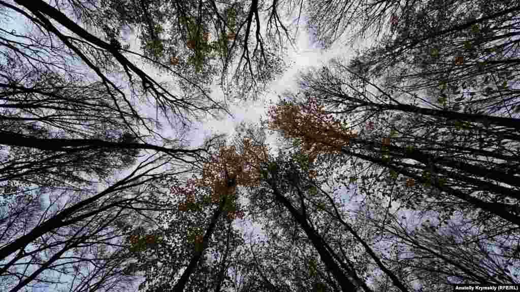Буковый лес на горе Грыця