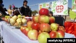 Яблочный фестиваль в Ак-Тале, Нарынская область, 22 сентября 2012 года.