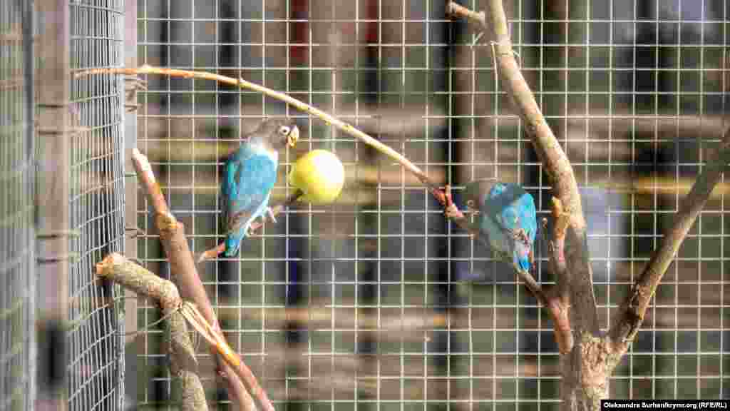 У парку живуть папуги з блакитним і зеленим оперенням