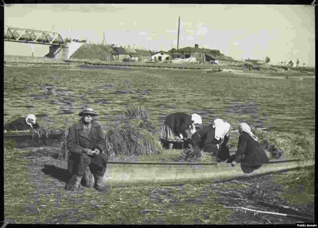 Лодкі зь сенам на беразе Піны