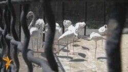 Bakı Zoolojı Parkı