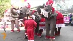 Подарки от королевских слонов