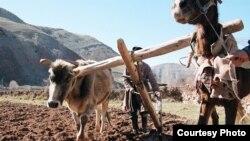 Uzbekistan - Farmer Working on his land. Undated.