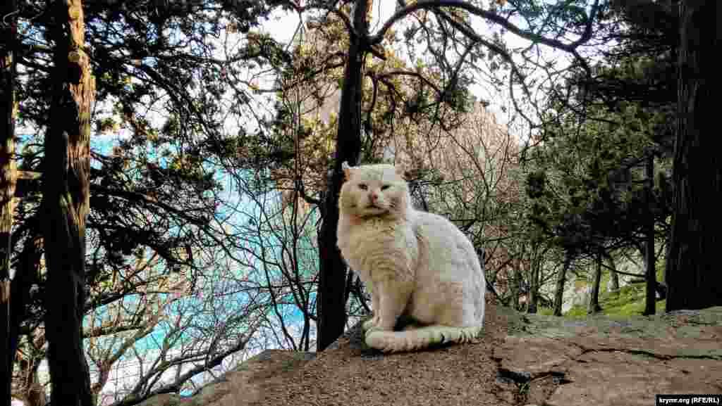Беспризорные коты и кошки ‒ символ Симеиза, ведь город расположен у горы Кошка