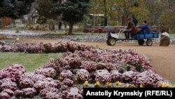 Хризантемы в снегу. Симферополь встречает зиму (фотогалерея)