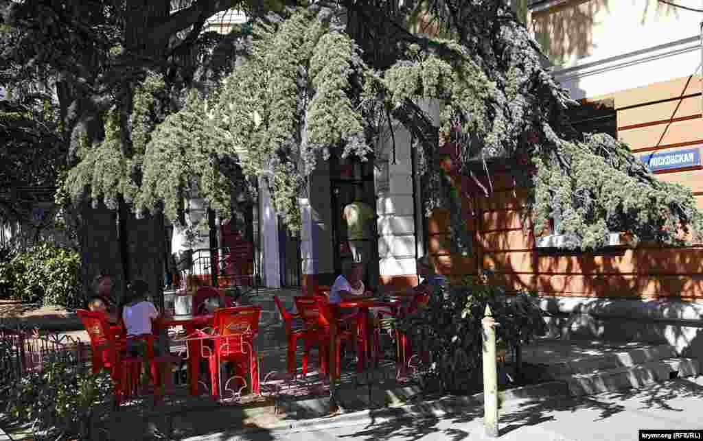 Столики кафе в тени огромного ливанского кедра – ну как не полюбить Ялту с первого взгляда!