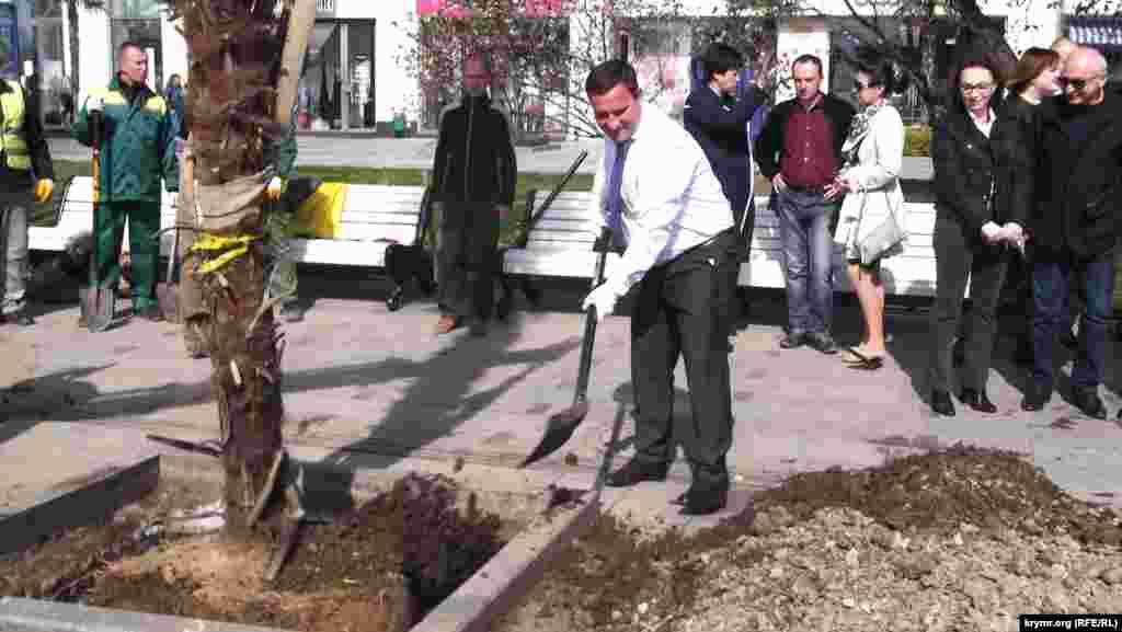Глава підконтрольної Кремлю адміністрації Ялти Андрій Ростенко 12 квітня посадив на пальмовій алеї міської набережної своє персональне дерево. Пальму він замовив в Італії на власні кошти.