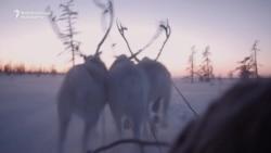 The Reindeer Herders