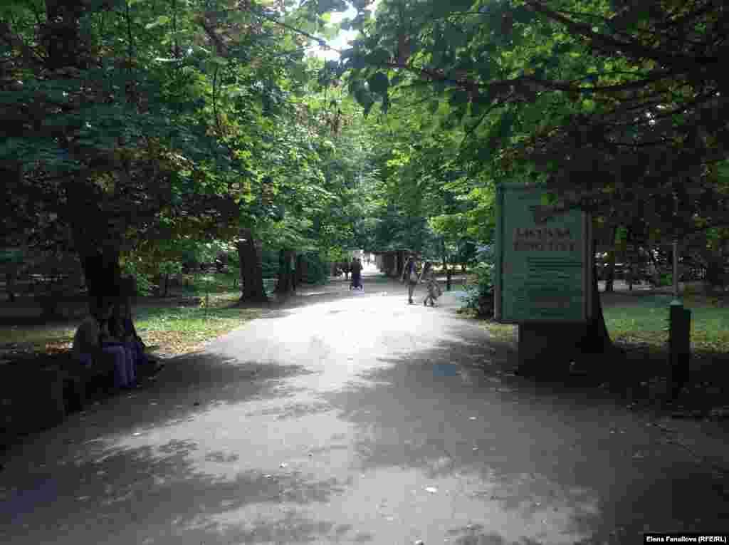 Такие аллеи - памятник идеального представления о парке в прошлом веке