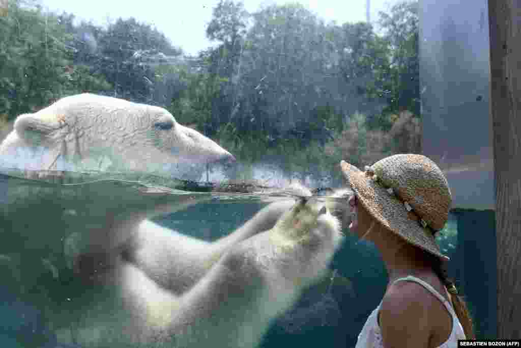 A woman looks through the glass of the enclosure of a polar bear as he cools off in the water at the zoo in Mulhouse, France, on August 3, as parts of Europe continue to swelter in an ongoing heatwave. (AFP/Sebastien Bozon)