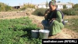 Türkmen aýaly