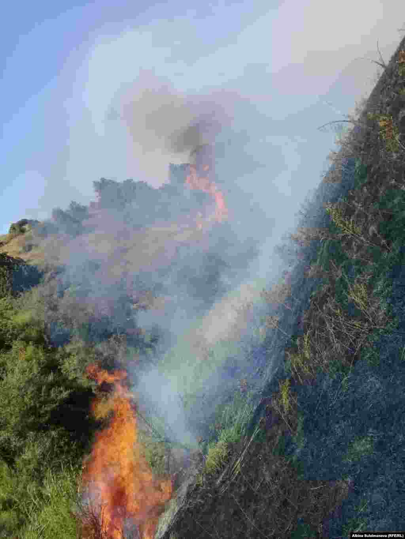 На борьбу с огнем брошены силы пожарных служб нескольких районов Таласской области.