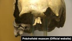 Этот череп мог принадлежать средневековому полководцу и кондотьеру