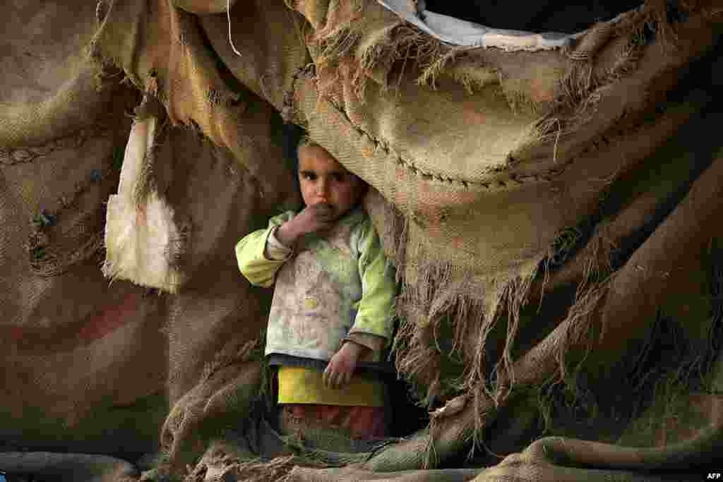 A displaced Syrian child looks out of a tent at a makeshift camp near the village of Tarshan, some 20 kilometers north of Raqqa after they fled their homes due to the battles between Syrian Democratic Forces and the Islamic State extremist group. (AFP/Delil Souleiman)