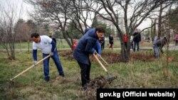 Премьер-министр Сапар Исаков на субботнике в Ботаническом саду. Бишкек, 24 марта 2018 года.