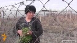Էլիտար ցորենի սերմնացուն դարձել է դատական վեճերի պատճառ