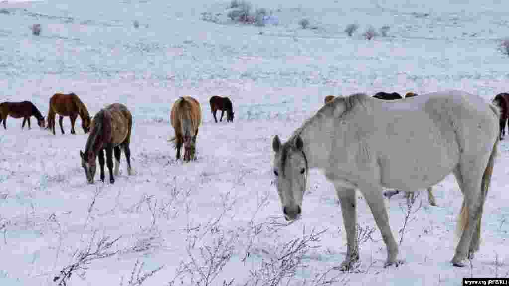 Взимку ця місцевість приваблює як туристів, так і табуни так званих прогулянкових коней місцевих конярів, що випасаються на яйлі незважаючи на сніг. Кореспондент Крим.Реалії прогулявся засніженою яйлою і зобразив усе на фото
