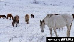 Кони на снегу: зима на крымской Долгоруковской яйле (фотогалерея)