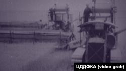 Крим, 1930-і роки. збір зернових, американські комбайни «Холт»
