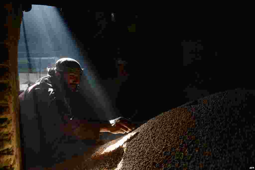 An Afghan day laborer works at a pea factory prior to the holy month of Ramadan in Kabul on June 26. (AFP/Shah Marai)