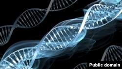 ДНК. Иллюстративное фото.