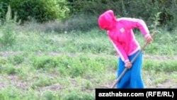 Türkmenistanly kärendeçi bir zenan