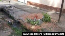Полувековая чинара, вырубленная в Избасканском районе Андижанской области.