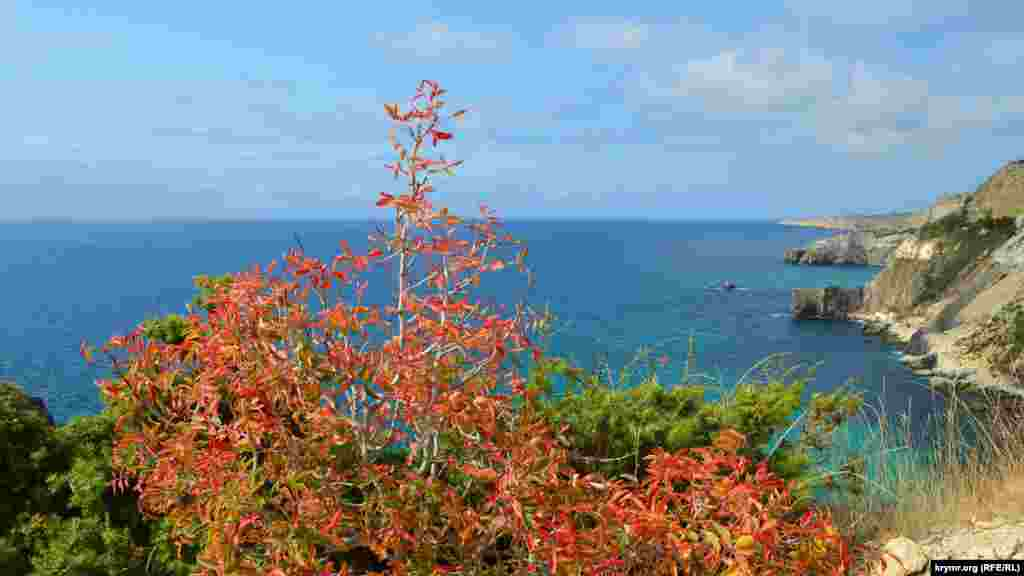 Флора на мысе Лермонтова окрасилась в осенние тона