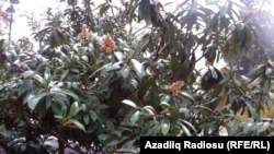 Azerbaijan-Baku-snow