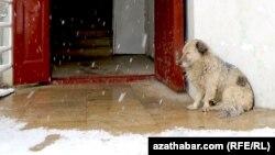 Aşgabat: eýesiz itler