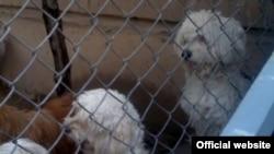 سگ های خانگی که توسط نیروی انتظامی در پارک پردیسان جمع آوری شده اند