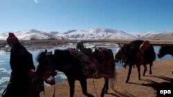 Атлар 5,5 мең ел чамасы елек хәзерге Казахстан җирендә йортлаштырылган