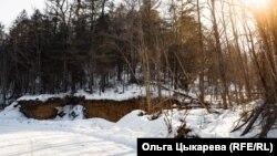 Таежный лес у деревни Гвасюги
