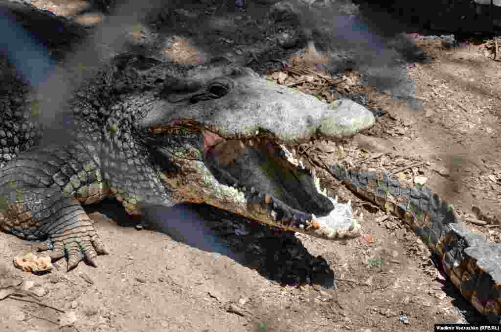 Вот крокодил. Ему палец в рот не клади.