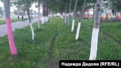 Деревья, которые покрасили жители Петропавловска-Камчатского