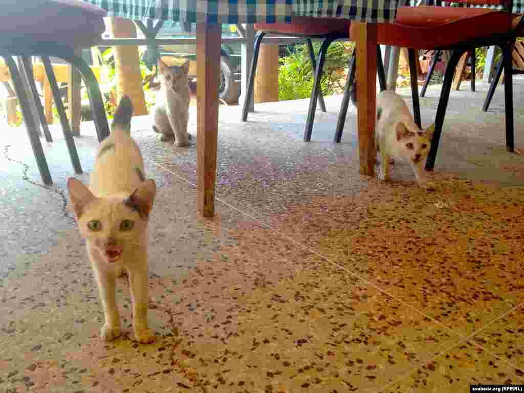 The cats of Mombasa, Kenya. (RFE/RL/Franak Viacorka)